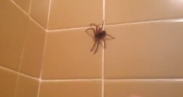 Video: Shoo-ing Away a Spider Goes Wrong