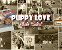 bkc-puppylove_contest_feature