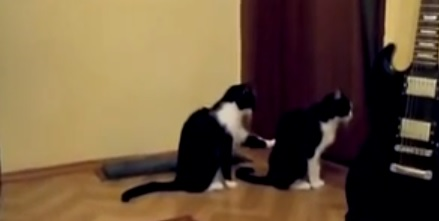Video: A Cat's Apology