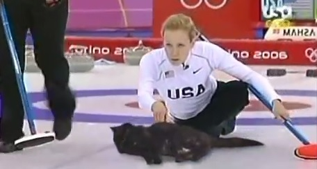 Video: Cat Curling Should Be a Real Thing