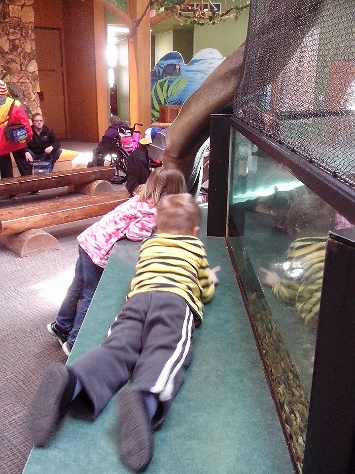 The kids are looking at turtles in the Wild Kingdom Pavillion