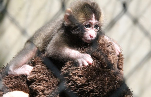 Visiting the new baby monkeys at the Zoo